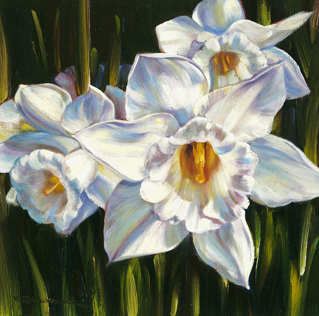 White Daffodils by Caroline Zimmermann